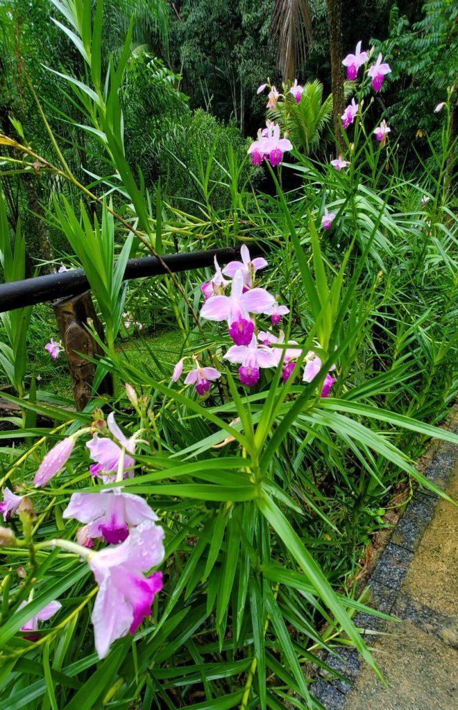 Orchids at Fazenda dos Cordeiros