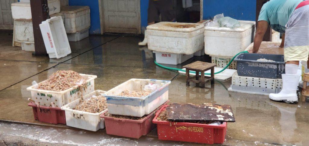 Fish processing at Farol do São Thomé